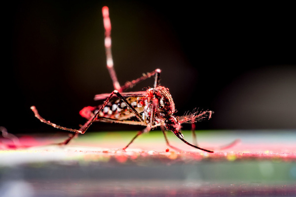 Light pollution may increase biting behavior at night in Aedes aegypti mosquitoes