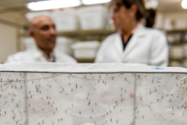 Spatial repellents significantly reduce infections of  mosquito-borne viruses, study finds